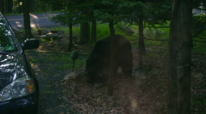 Bear: Another Wildlife Visitor to Our House
