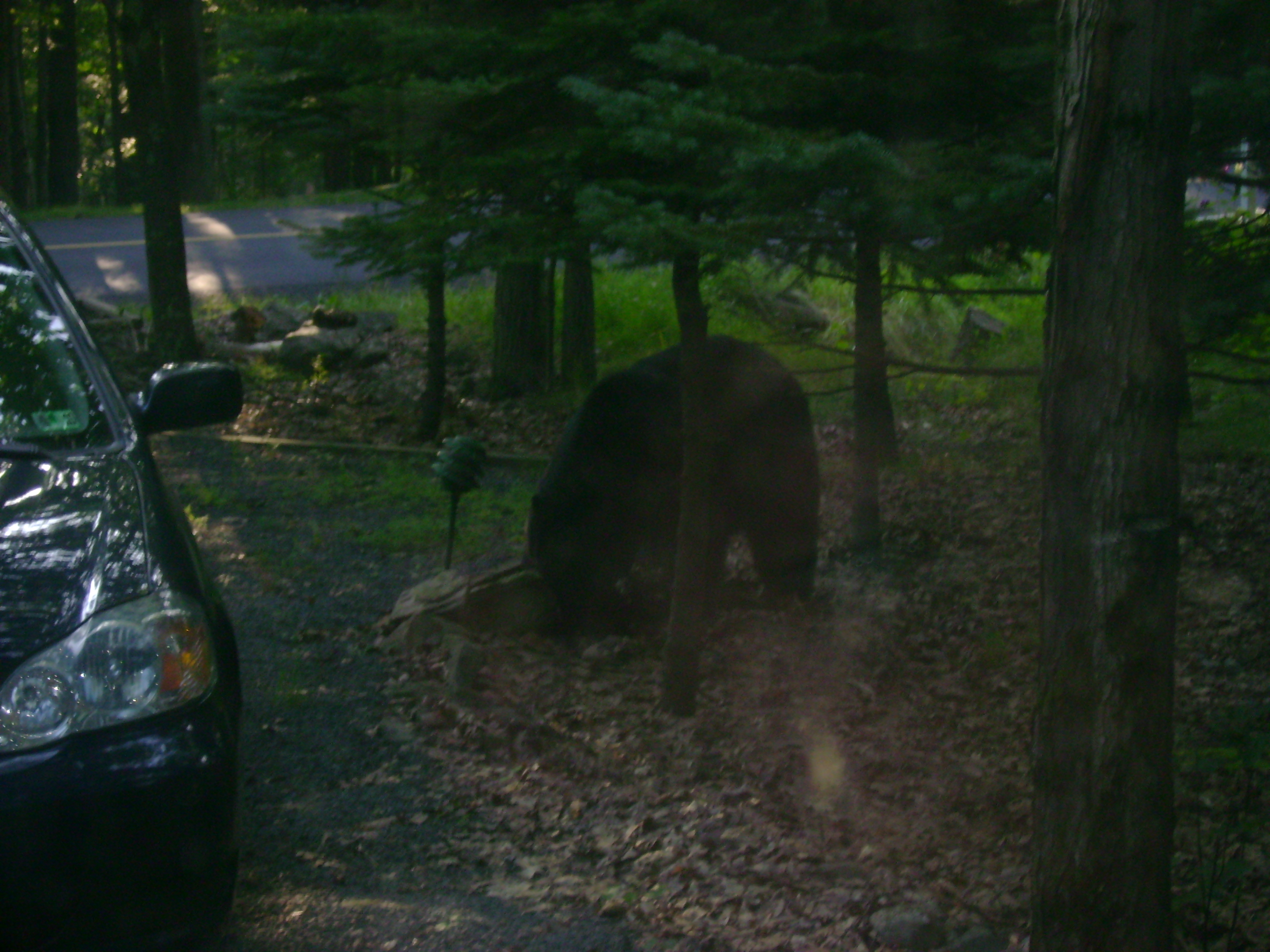 Bear sighting 003