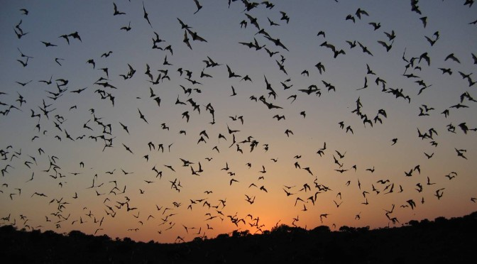 A Reader Offers Her Own Bat Horror Story