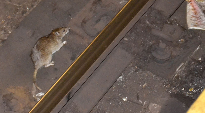 Oh Rats! A Subway Stare-Down That I Lost